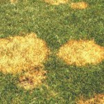 Diseases Prevented with Fungicides