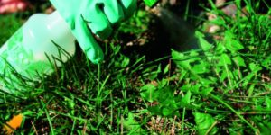 5 Best Organic Weed Killers/Preventers